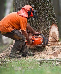 tree service arlington