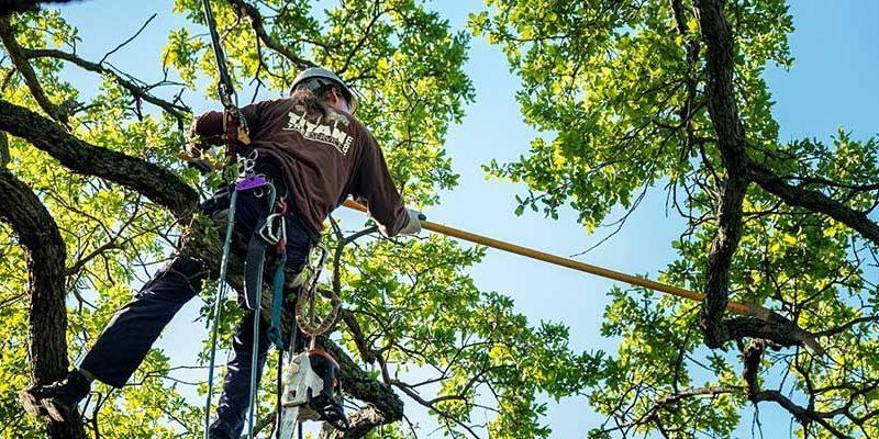 Tree Trim Denver
